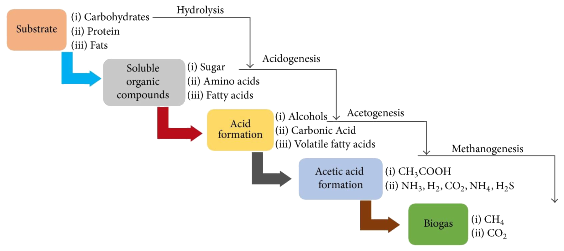 Anaerobic digestion phases